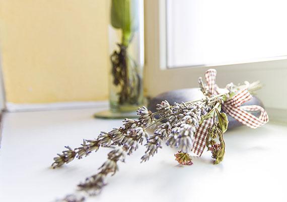 Lavendel Moods Unterkunft Fernweh Heimatliebe Fotografie